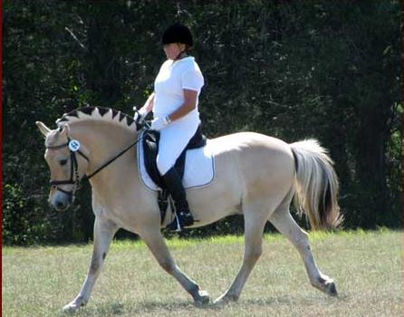 Horse Boarding, Horse Riding Lessons, Horse Grooming